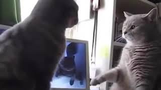راز بقا خنده دار این قسمت گربه