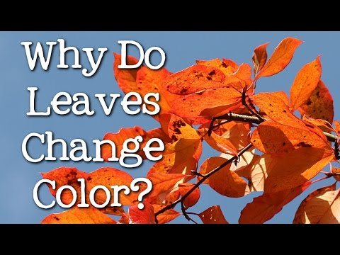 Why Do Leaves Change Color? What Makes the Leaves Fall? FreeSchool