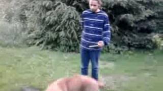 Pies przybłęda potrzebuje właściciela