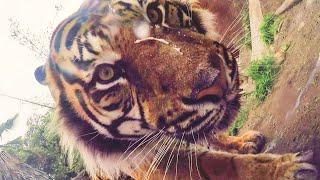 Google Photos: Animals Take Selfies at the LA Zoo