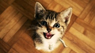 Funny Cats and Kittens Meowing Compilation (2015)
