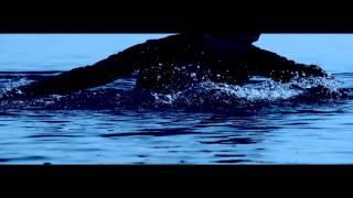 dokhtare bala-morteza ashrafi-music by mohsen sadeghi p.o.m