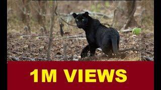 Rare Animals in Mudumalai National Park| MUDUMALAI NATIONAL PARK ANIMALS | FULL VIDEO