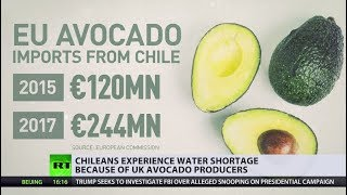 Chileans forced to drink dirt as UK avocado plantations suck up all the water