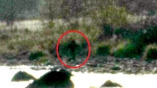 Bigfoot Reportedly Sighted In Northern California, Pictures Go Viral