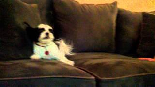 Mom vs DOG