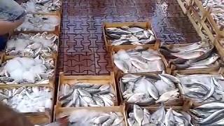 2014 Antalya Balık Mezatı...