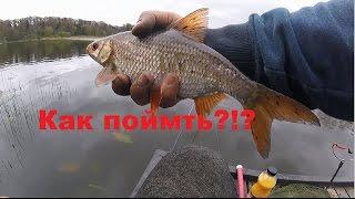 рыбалка на большую плотву видео