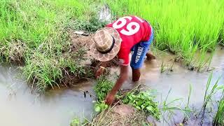 AMAZING Net Fishing   Primitive Technology fishing   Cambodia Traditional Fishing  Part 82