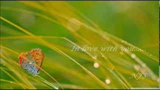 DANA WINNER - IN LOVE WITH YOU
