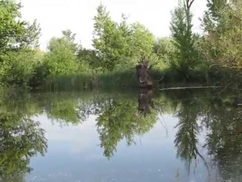 рыбалка в чопе