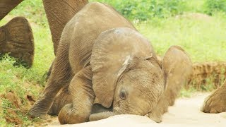 Baby Elephants are So Clumsy! | First Year on Earth | BBC Earth
