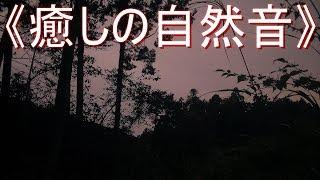 《癒しの自然音》 虫 の鳴き声 「TYPE 3」 夏の静かな夜 (リフレッシュ・ストレス解消・リラックス・安らぎ)