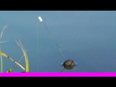 ловля линя на кивок в мае