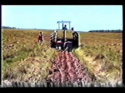 Maquina plantadeira florestal