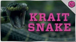 KRAIT SNAKE: THE NOCTURNAL NINJA KILLER