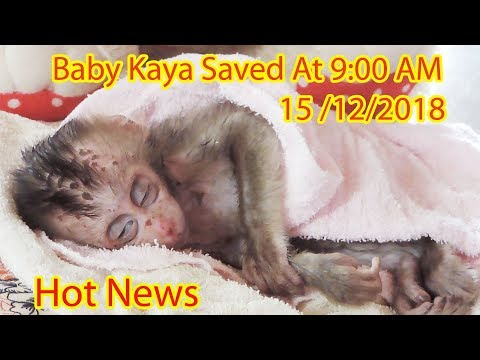 Xxx Mp4 Hot News Poor Baby Kaya Saved From Sister Kayla At 9 00 Am On 15th December 2018 PTM 1477 3gp Sex