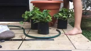 How to make a Mini Pond out of a Flower Pot.