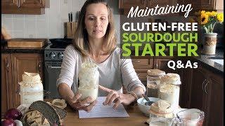 Maintaining a Gluten-Free Sourdough Starter - Part 2