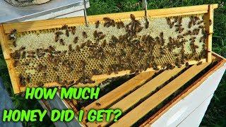Adding Second Honey Supers