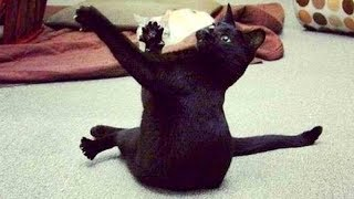Try YOUR BEST not to LAUGH at these FUNNY CATS - Funny CAT compilation