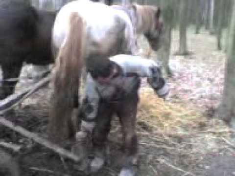 zdenerwowany koń D