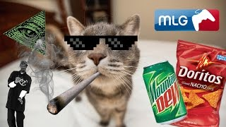 MLG Cats In Action