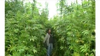 Growing Cannabis And Climate Change