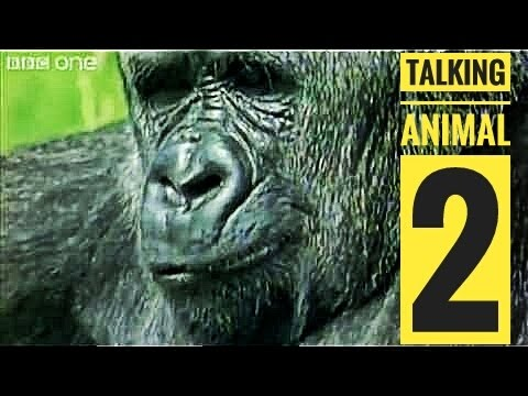 Animal Talking -2 Marwari funny dubbed best comedy(Ambika Dj Novi) Desi Rajasthani Video