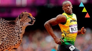 10 animales que corren más rápido que Usain Bolt