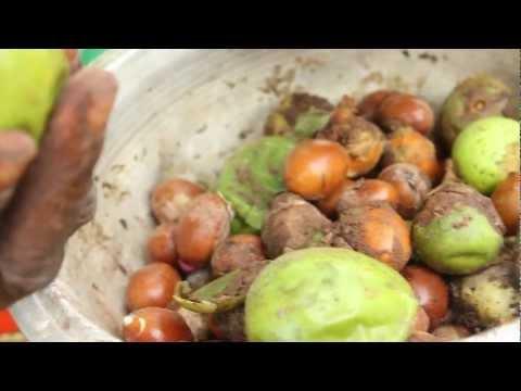Shea Butter Processing - Peace Corps Ghana