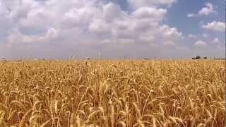 Wheat Harvest 2012 - Wilra Farms