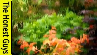 8 HOURS - Relaxing Rain on Conservatory Roof - Sleep - Insomnia - Meditation - FULL HD