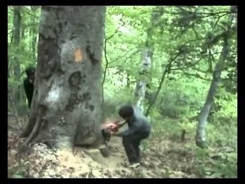 Ağaç Kesimi wWw.aktatdernegi