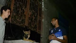 مفاجأة بيع الكلب راموس_ انواع الكلاب المهمه للحراسه_كلبك راجل فى البيت وفى الشارع قطه