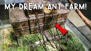 MY DREAM ANT FARM: LEAFCUTTER ANTS!