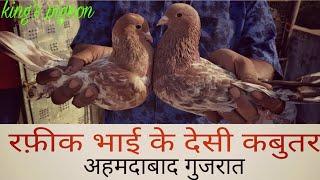 RAFIQ BHAI OR USMAN USTAD KE DESI HIGH FLAYER PIGEON(KABUTAR)AHMDABAD GUJRAT