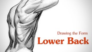 How to Draw Lower Back Muscles - Form