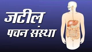 जटिल पचन संस्था | Jatil Pachan Sanstha | 10th Std | Science | Marathi Medium | Home Revise