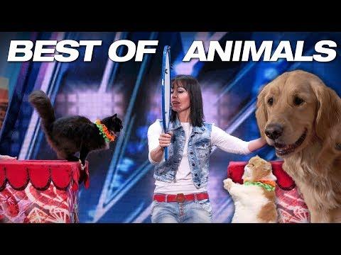 Xxx Mp4 Animals Got Talent Even Singing Dogs America 39 S Got Talent 2018 3gp Sex