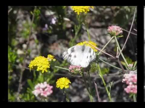 Xxx Mp4 Checkered White B Reel Life Cycle Clip Collection V18665 3gp Sex