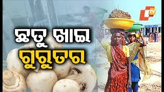 Labourers taken ill after eating poisonous mushroom in Rayagada