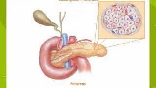 Exocrine Gland and Endocrine Glands