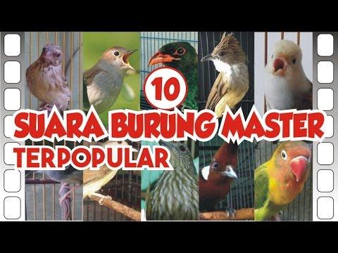 TOP #10 Suara Burung Master *TERPOPULAR*