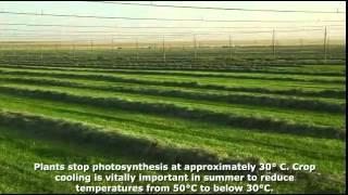 Floppy Irrigation