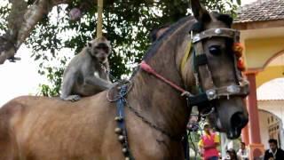 Actraksi Kuda Menari