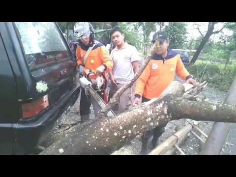 Evakuasi pohon tumbang diruas jalan brajan barat sate pak pong sar sultan agung