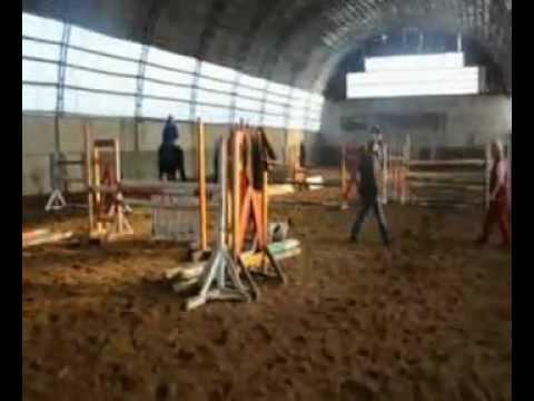 sg horses LIMBO
