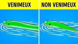 Que Faire si tu Croises un Serpent ?