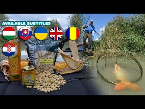 Döme Gábor Kukoricás praktikák a modern pontyhorgászatban